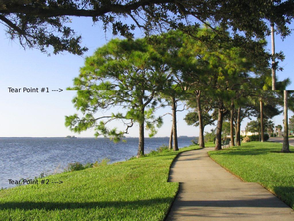 Park near beach showing screen tearing